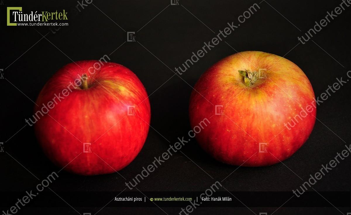 Asztracháni piros alma