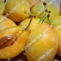 termek774/tipala-sarga-szilva-774-1118828369-1200.jpg / Tipala® (sárga) szilva