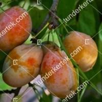 termek774/tipala-sarga-szilva-774-2106030353-1200.jpg / Tipala® (sárga) szilva
