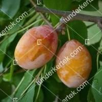 termek774/tipala-sarga-szilva-774-957951159-1200.jpg / Tipala® (sárga) szilva