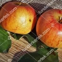 termek81//cox-narancs-renet-81-921644841-1200.jpg / Cox narancs renet