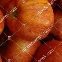termek81/cox-narancs-renet-81-874071569-1200.jpg / Cox narancs renet