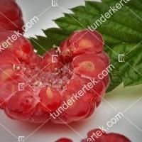 termek810/autumn-bliss-malna-folytonterm-810-1663056559-1200.jpg / Autumn bliss málna (folytontermő)