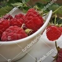 termek810/autumn-bliss-malna-folytonterm-810-187403881-1200.jpg / Autumn bliss málna (folytontermő)