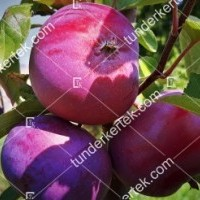 termek811//vorosbelu-alma-811-1228525697-1200.jpg / Vörösbélű alma