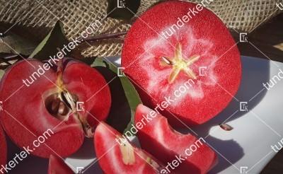 Vörösbélű alma
