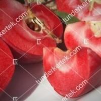 termek811//vorosbelu-alma-811-676665359-1200.jpg / Vörösbélű alma
