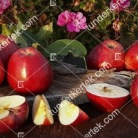 termek815//delicious-815-1570147896-1200.jpg / Delicious (régi fajta)