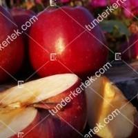 termek815//delicious-815-1600738237-1200.jpg / Delicious (régi fajta)