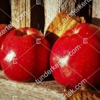 termek815//delicious-815-290088188-1200.jpg / Delicious (régi fajta)