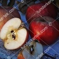 termek816//csemege-alma-regi-fajta-816-704498855-1200.jpg / Csemege alma (régi fajta)