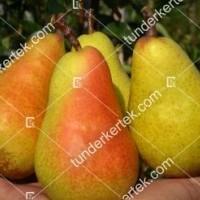 termek824//harrow-sweet-korte-824-402283448-1200.jpg / Harrow Sweet körte
