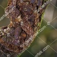 termek841//nektrias-agrakbetegseg-841-1739147540-1200.jpg / Nektriás ágrákbetegség