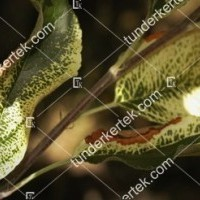 termek843//almamozaik-843-1522613070-1200.jpg / Alma mozaik