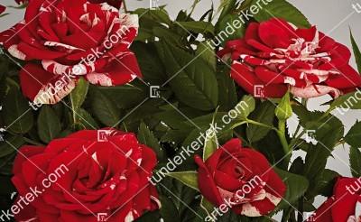 Gigi Parade® rózsa