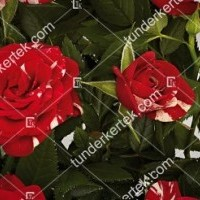 termek855//parade-mveszrozsa-855-928015687-1200.jpg / Gigi Parade® rózsa