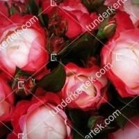 termek856//nosztalgia-rozsa-856-1206317059-1200.jpg / Nosztalgia rózsa