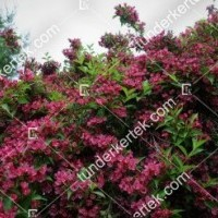 termek888//rozsaszin-hercegn-rozsalonc-888-2050838036-1200.jpg / Rózsaszín hercegnő rózsalonc