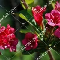 termek888//rozsaszin-hercegn-rozsalonc-888-269557582-1200.jpg / Rózsaszín hercegnő rózsalonc