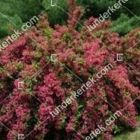 termek888//rozsaszin-hercegn-rozsalonc-888-562729012-1200.jpg / Rózsaszín hercegnő rózsalonc