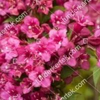 termek888//rozsaszin-hercegn-rozsalonc-888-739227217-1200.jpg / Rózsaszín hercegnő rózsalonc