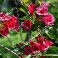 termek888//rozsaszin-hercegn-rozsalonc-888-991028013-1200.jpg / Rózsaszín hercegnő rózsalonc