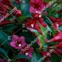 termek891//eva-rathke-rozsalonc-891-1979536794-1200.jpg / Eva Rathke rózsalonc