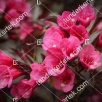 termek893//alexandra-rozsalonc-893-1687423676-1200.jpg / Alexandra® rózsalonc