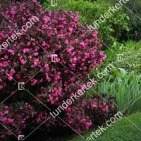 termek893//alexandra-rozsalonc-893-195067235-1200.jpg / Alexandra® rózsalonc