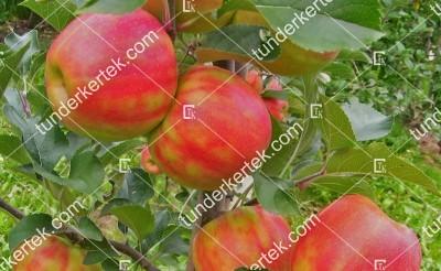 Karnevál alma