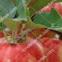 termek96/karneval-alma-96-689202362-1200.jpg / Karnevál alma