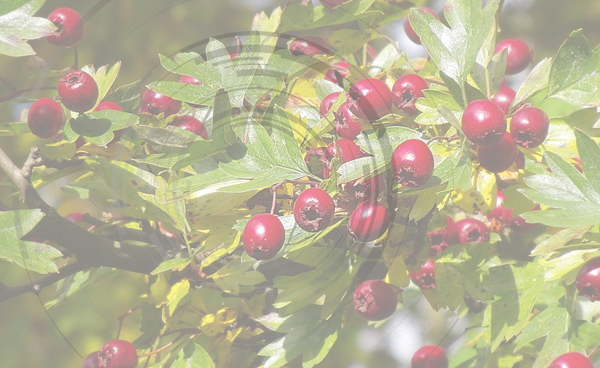 Fruit me: Raspberry me