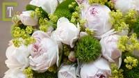 Christiana hercegnő rózsa